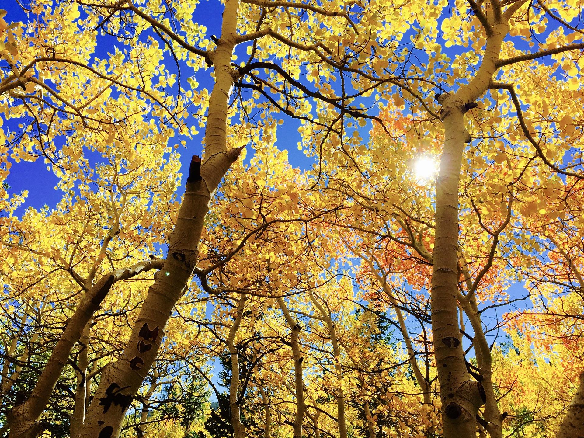 もう秋ですね…